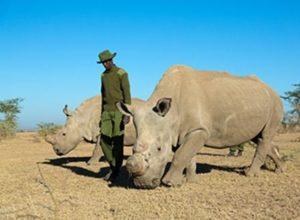 Животные в Кении