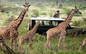 масаи мара