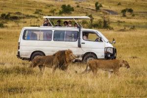 masai mara van