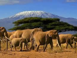 Amboselli