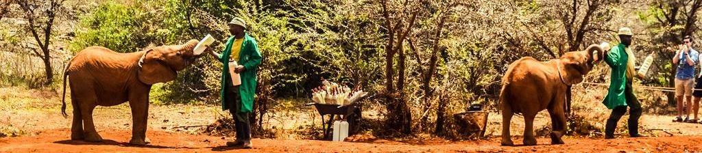 Приют Шелдрика, Русский гид Кения