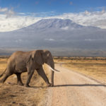 Safari 4 days 3 nights Nairobi - Amboseli-Tsavo West, Tsavo East
