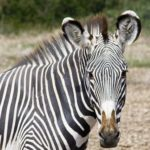 Safari 5 days and 4 nights on the coast