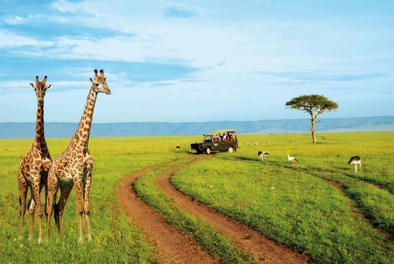 На сафари в Кении