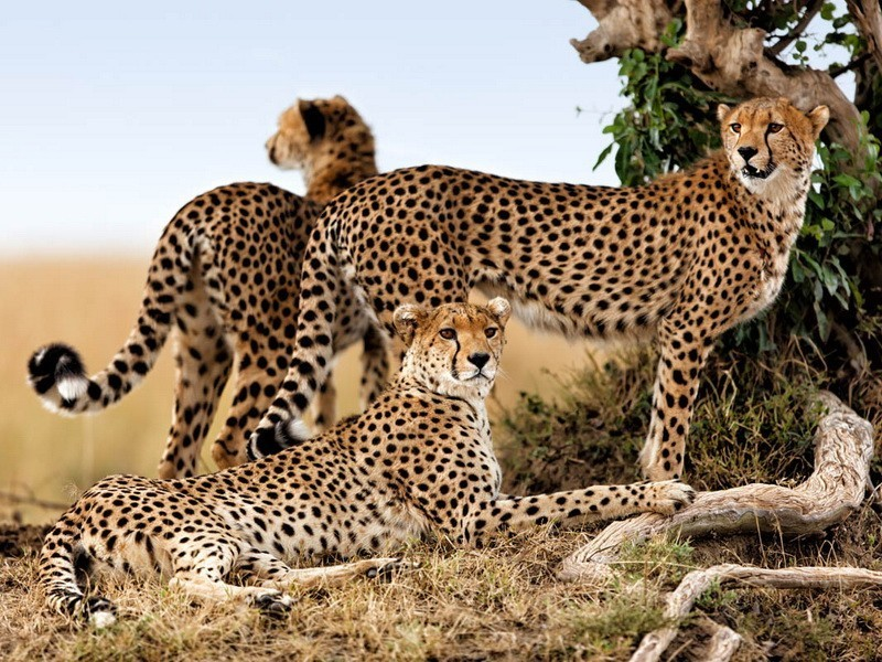 Safari 5 days and 4 nights (Taste of Kenya)