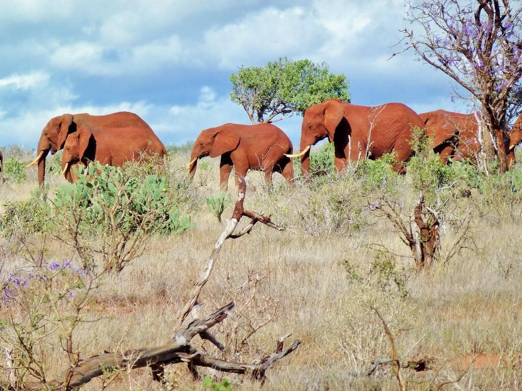 Сафари из Момбасы - парк Цаво