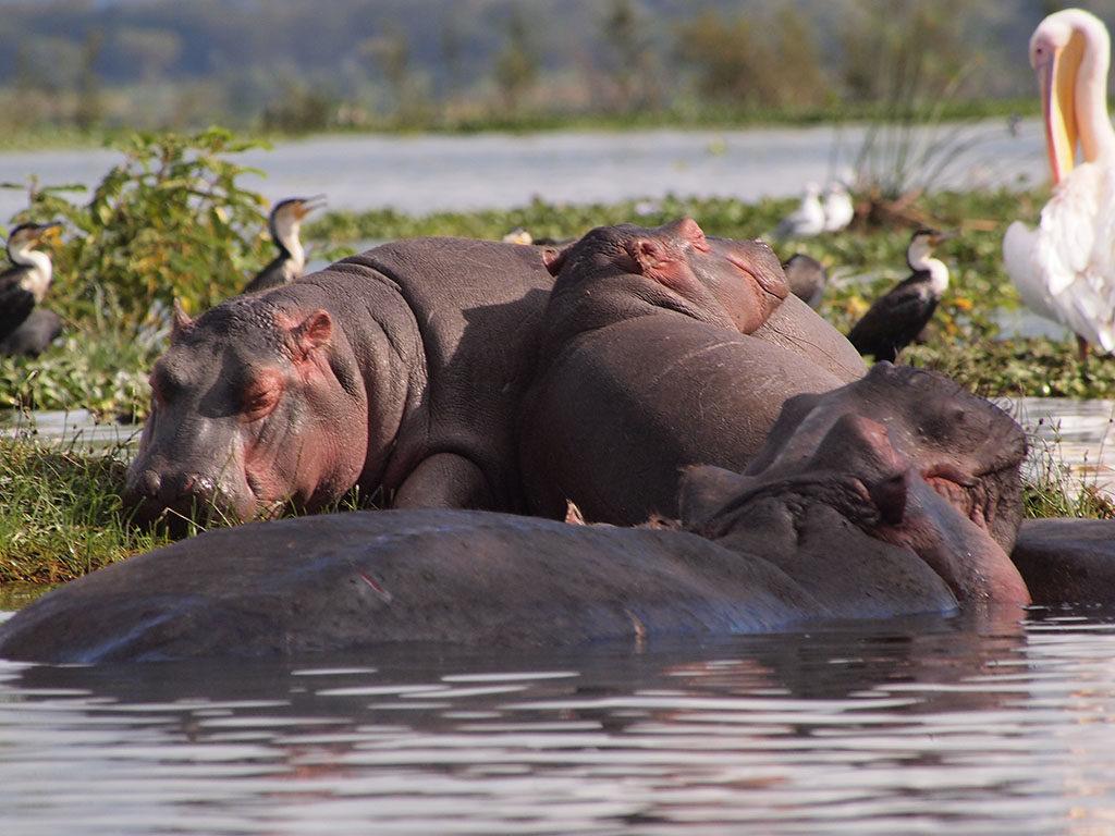 Сафари в Кению