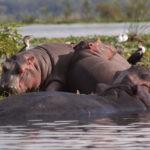 Safari 4 days and 3 nights, Masai Mara + Lake Nakuru