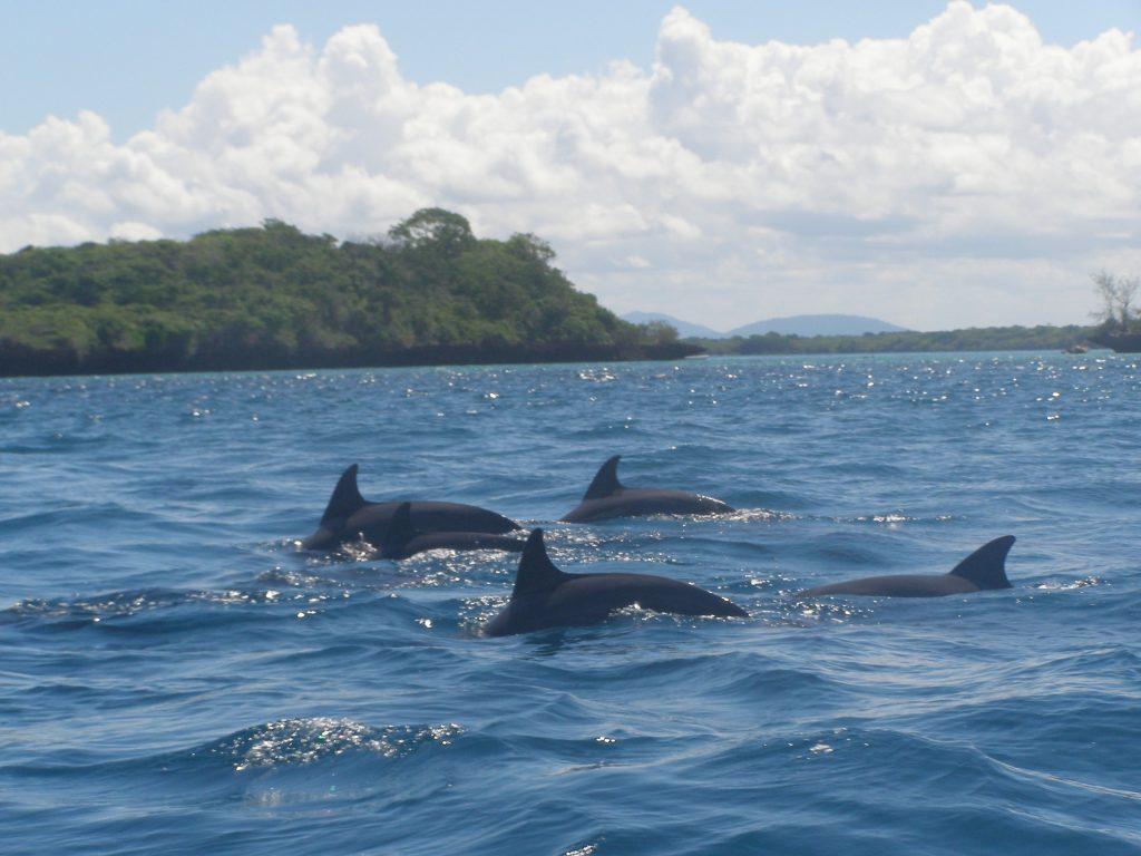 Дельфины в национальном парке Кисите