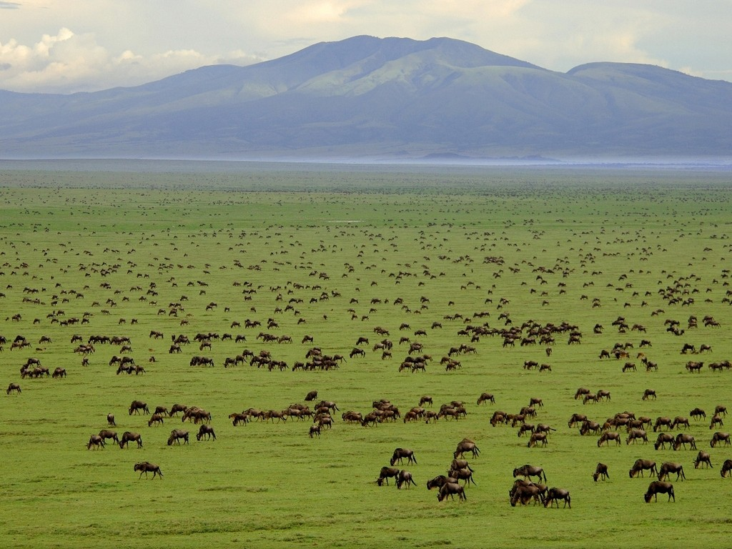 Serengeti_tanzania