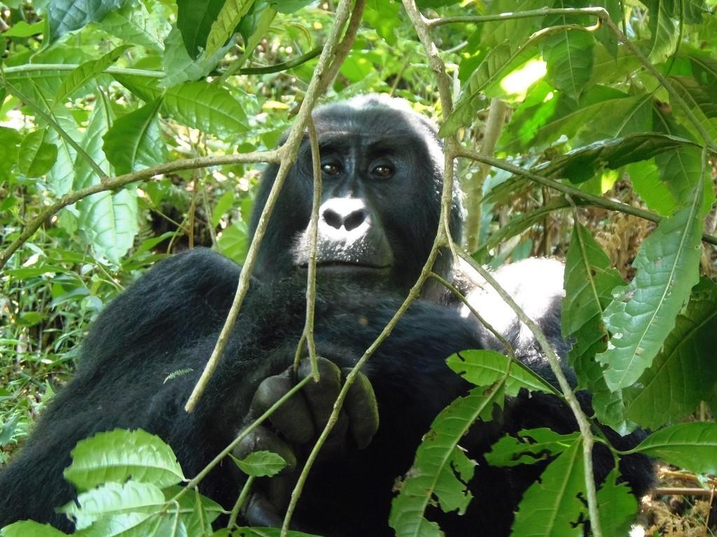путешествие в Кению - наблюдаем обезьян