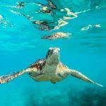 Пляжи Кении в Индийском океане - Диани-Бич в Момбасе