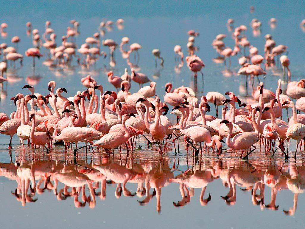 Сафари в Танзании - озеро Маньяра