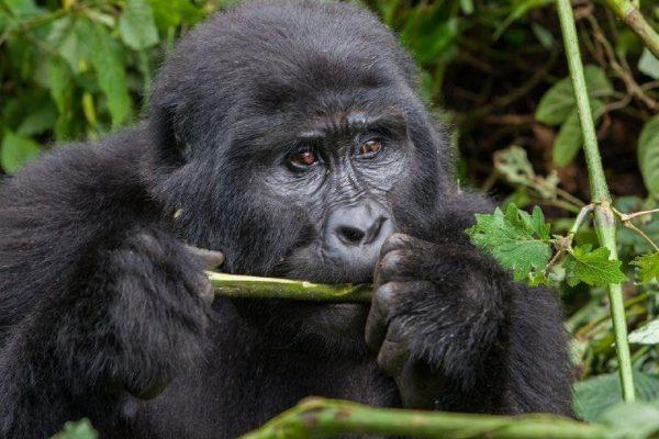 Сафари в Уганде