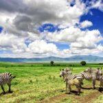 Тур в Танзанию - 5 дней/ 4 ночи для самых любопытных