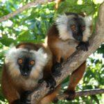 Мадагаскар. Остров Нуси-Бе - 8 дней / 7 ночей