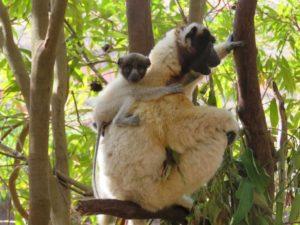 Мадагаскар туры