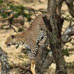 Сафари из Момбасы - Восточный Цаво и Таита Хиллс