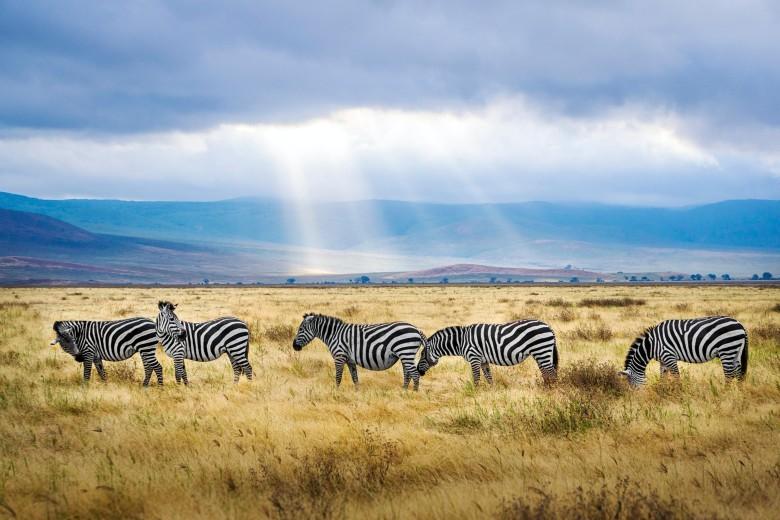 Сафари в Танзании и Кении