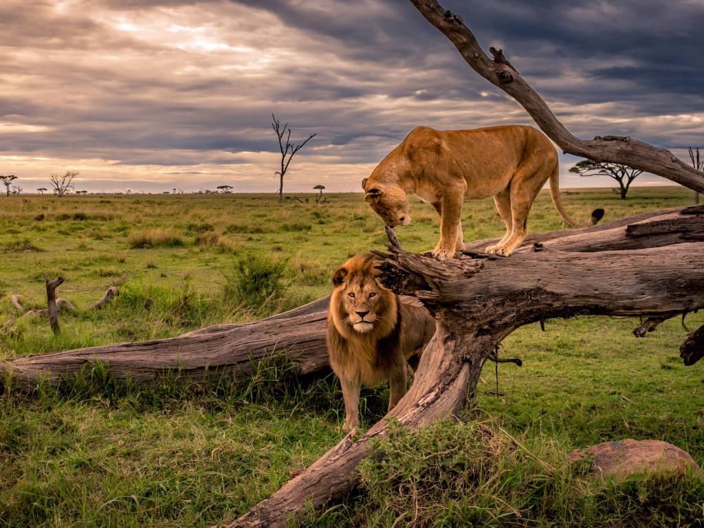 Тур в Кении по Национальным паркам и с отдыхом на побережье