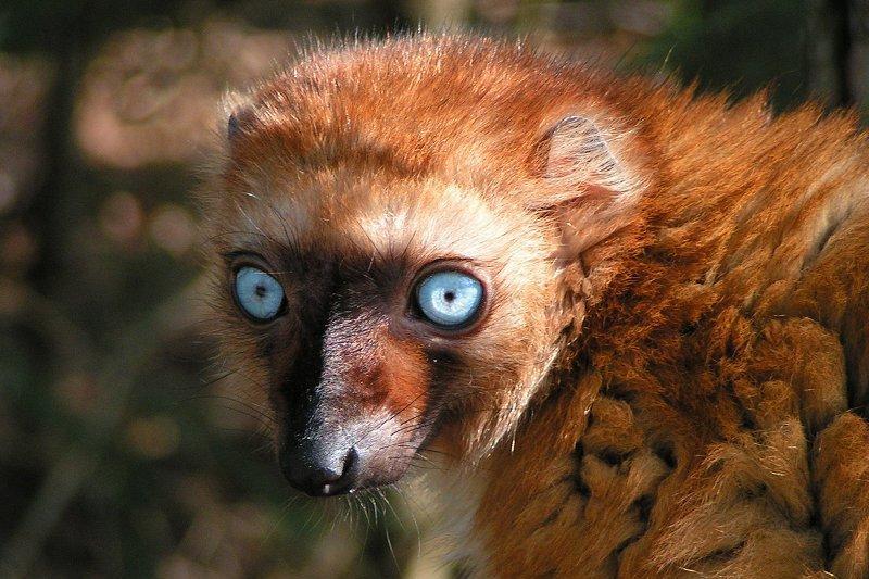 В туре на Мадагаскар вы увидите лемуров