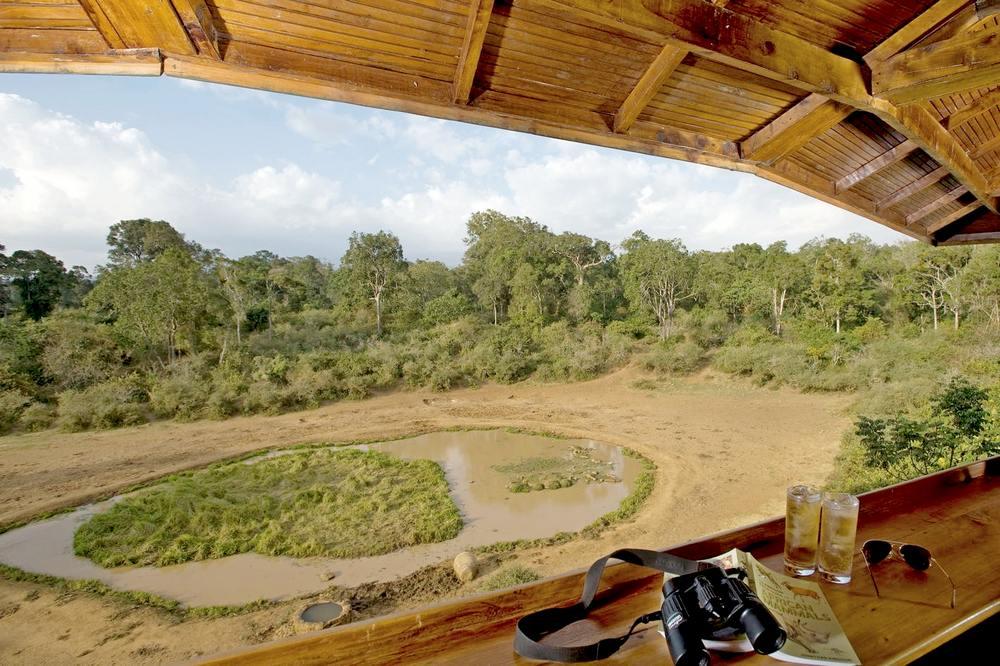 Древесные отели на горе Кения