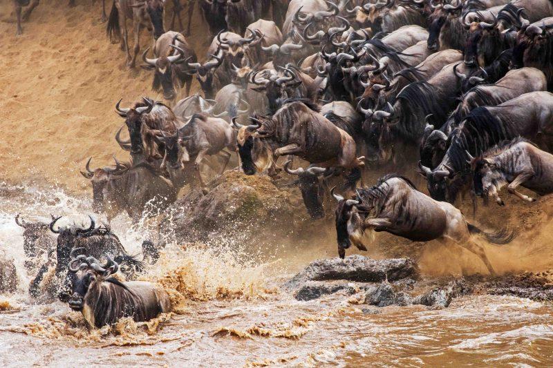 сафари в Кении Великая Миграция