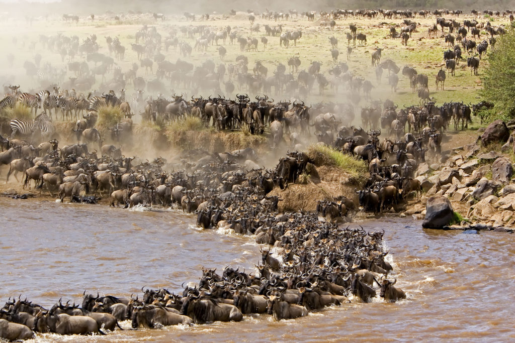 великая миграция -сафарив кении