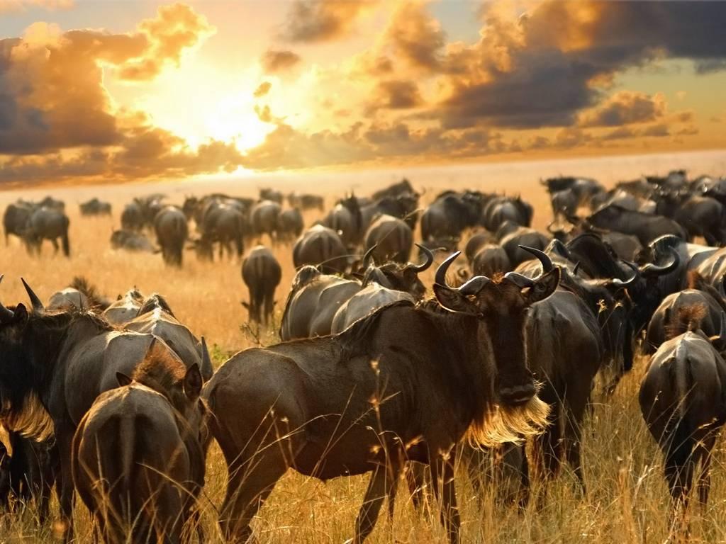 Великая миграция в Кении. Тур на 10 дней