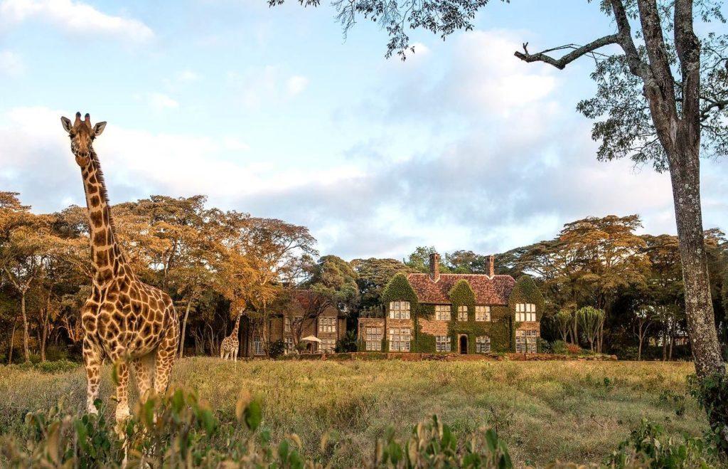 лучшее сафари в кении