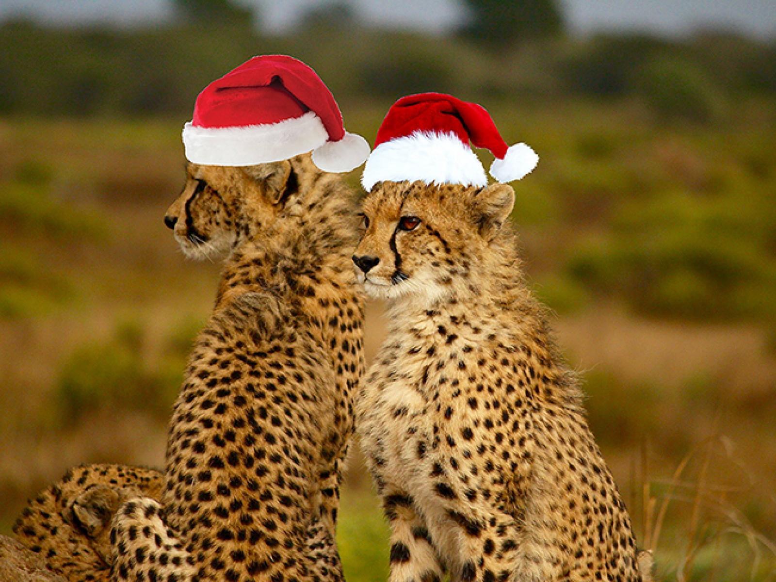 Вип Новый год в кении