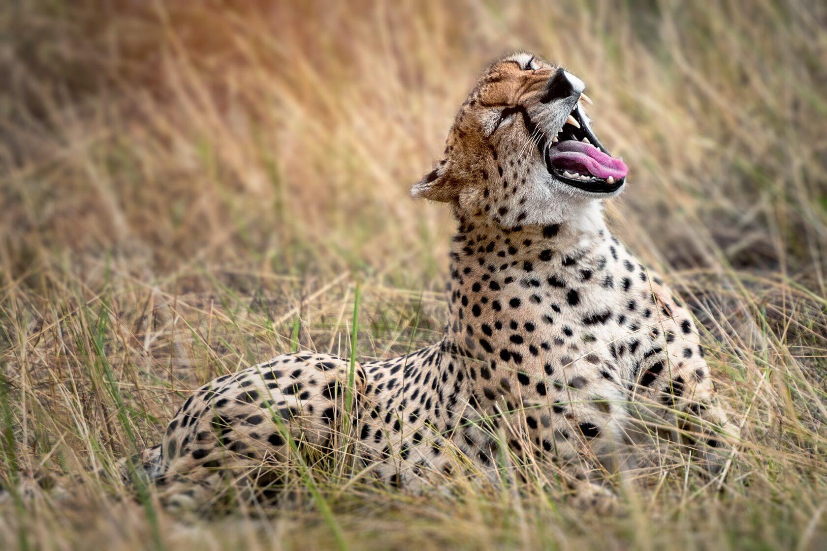 кенийское сафари