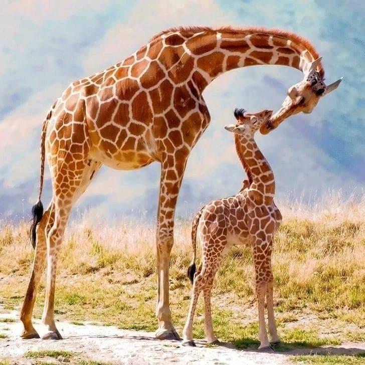 туры и сафари в кении